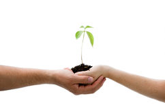 Free Plant In Hands Stock Image - 5932081