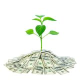 Plant In Money Royalty Free Stock Photo