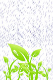 Plant In The Rain Stock Images
