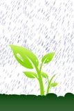 Plant In The Rain Stock Photo