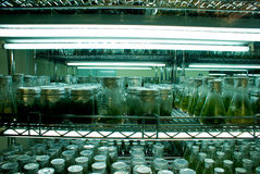 Plant Incubator Room Royalty Free Stock Image
