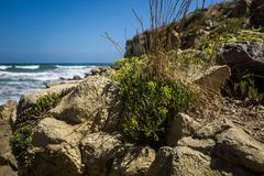 Plant infront of the coast Royalty Free Stock Image