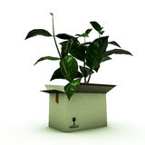 Plant inside a box Stock Images
