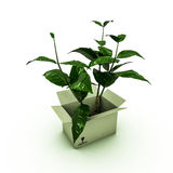 Plant inside a box Royalty Free Stock Photos