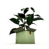 Plant inside a box Royalty Free Stock Photo