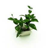 Plant inside a box Stock Photos