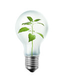 Plant inside a bulb Stock Images