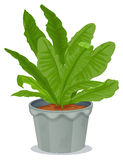 A plant inside a gray pot. Illustration of a plant inside a gray pot on a white background Stock Photos