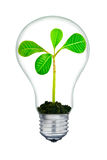 The plant inside the light-bulb,isolated on white background Royalty Free Stock Photography