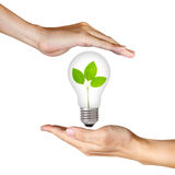 Plant inside light bulb between two hands Stock Photos