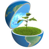 Plant inside planet Stock Photography