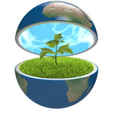 Plant inside planet Stock Photo