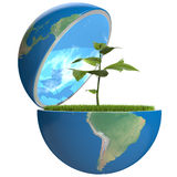 Plant inside planet Royalty Free Stock Image