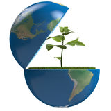 Plant inside planet Royalty Free Stock Images