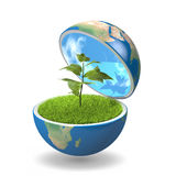 Plant inside planet Royalty Free Stock Photo