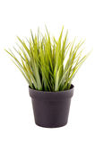 Plant Stock Photography