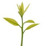 Plant isolated on white background Stock Images