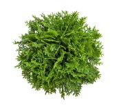 Plant isolated on white background Royalty Free Stock Image