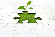 Plant jigsaw. New sprout growing from grass inside a jigsaw Stock Photos