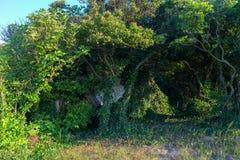 Plant at Karalar regional landscape park in Crimea. Stock Photos