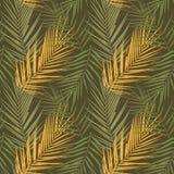 Plant Kentia. Vector illustration Royalty Free Stock Photo