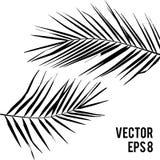Plant Kentia. Vector illustration Stock Photo