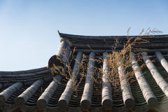 Plant on a korean tiled roof Royalty Free Stock Photos