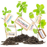 Plant Label Concept Royalty Free Stock Image