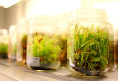 Plant in laboratory Stock Image