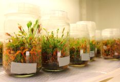 Plant in laboratory Royalty Free Stock Photography