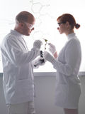 Plant laboratory analysis Royalty Free Stock Photography