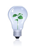 Plant in lamp. Vector illustration Stock Image