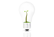 Plant in the lamp Royalty Free Stock Photos