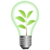 Plant in lamp Stock Photography