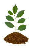 Plant in land Royalty Free Stock Photos
