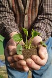 Plant and land in the hands. Plant and soil in your hand ready for the transplant of life Stock Images