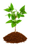 Plant in land Stock Image
