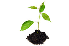 Plant in land - new life concept Stock Image
