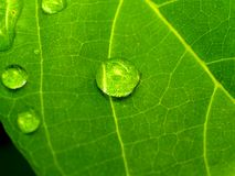 Plant leaf  01 Stock Images