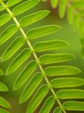 Plant leaf 03 Stock Image