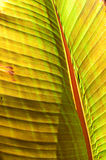 Plant Leaf. Illuminated by sun in the Basque district of Boise, ID Stock Image