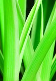 Plant leaf Stock Photo