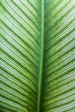 Plant leaf Royalty Free Stock Photos