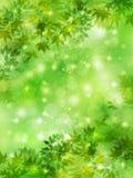 Plant leaf background Stock Image
