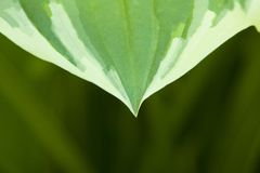 Plant leaf, design and colorful leaf royalty free stock photos