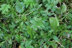 Plant, Leaf, Flora, Grass