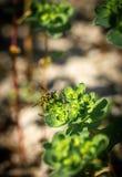 Plant, Leaf, Flora, Herb stock image
