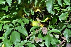 Plant, Leaf, Flora, Tree royalty free stock photo