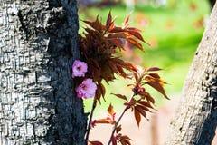 Plant, Leaf, Flora, Tree stock image