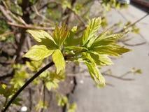 Plant, Leaf, Flora, Tree royalty free stock image
